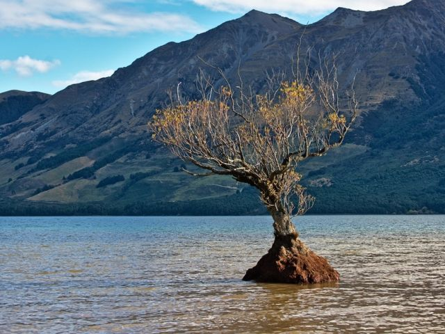 Image of a tree growing in water