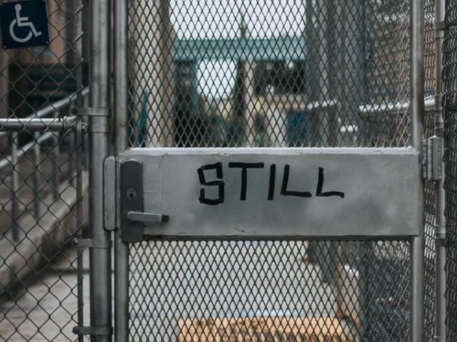 """Image of door in chainlink fence that says """"Still Free"""""""