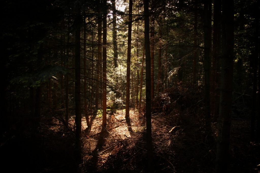 Image of a densely wooded forest